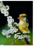 tableau animaux artartiste colibri : Le colibri