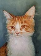 tableau animaux art artiste chat : Le chat de couleur blanc et feu