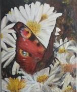 tableau animaux papillon fleur insecte alsace : Paon du jour
