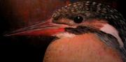 tableau animaux animaux oiseaux orange realiste : Martin Pêcheur
