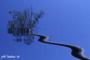 photo paysages pin landes ciel : cryptage 3