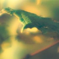 Couleurs végétales  Lorraine_020