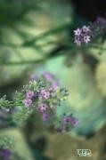 photo nature fleur beaute senteur : Senteur et beauté