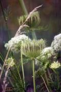 photo fleurs nature fleur beaute sauvage : Pas si banal2