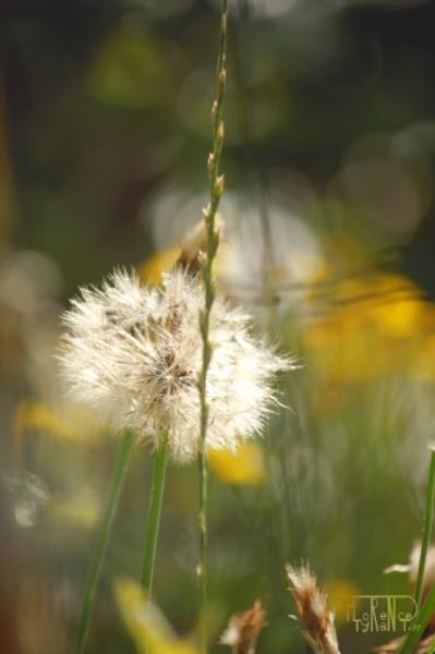 PHOTO nature fleur beauté sauvage Fleurs  - Pas si banal