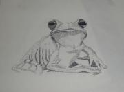 dessin animaux grenouille : la grenouille