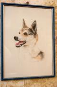 dessin animaux vivant : portrait