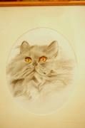 dessin animaux vivant attrayant : portrait