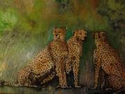 tableau animaux guepard : Guépard, les trois frères 147x115
