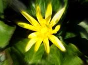 photo fleurs fleur : printemps