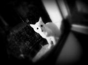 photo animaux : minou