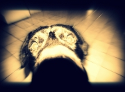 photo animaux chien : PIF