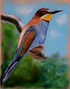 tableau animaux animaux oiseau couleur : Oiseau coloré