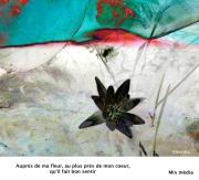 art numerique fleurs : Auprés de ma fleur
