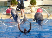 photo animaux dauphin jeu : Dauphin Joueur