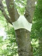photo paysages arbre art cul : Arbre Culotté