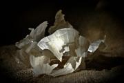 photo nature morte ail cuisine : Les Aulx 6
