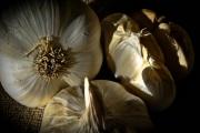 photo nature morte ail cuisine : Les Aulx 1