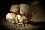 photo nature morte ail cuisine : Les Aulx 5