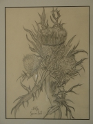 tableau fleurs fleur lorraine chardon crayon : chardon Lorrain