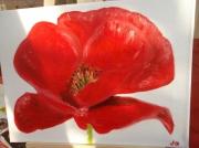 tableau fleurs : MON COQUELICOT