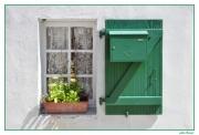 photo autres facades murs fenetres volets : vert de Ré