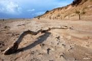photo marine ile de re plages bois : le serpent de mer