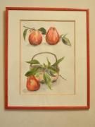 tableau nature morte pommes rouge vert encadre aquarelle : les pommes