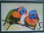 tableau animaux perroquets couleurs oiseaux : DISCUSSION COLOREE