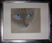 tableau animaux art animalier chat pastel : Regard
