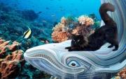art numerique animaux chat noir mer poissons : Rêverie sous-marine