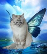 art numerique animaux chat lagon : le chat du lagon