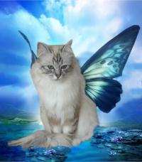 le chat du lagon
