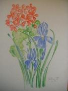 tableau fleurs fleur geranium iris : geranium & iris