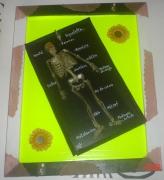 tableau personnages personnages abstrait crealuc peinture : Squelette