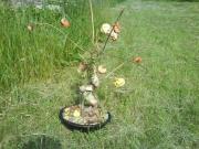 autres nature morte arbre fleurs : Arboressence