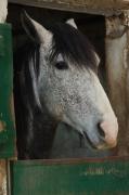 photo animaux cheval fenetre nice : Tranquillité ( photo sur toile)