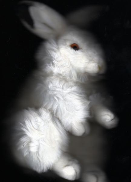 PHOTO animal lapin Animaux  - Alice's rabbit