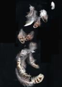 photo nature morte plumes anges : parure d'ange I