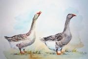 tableau oies volailles animaux aquarelle animaux ferme : La parade