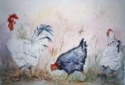 tableau animaux poule coq bassecour volailles : Escapade