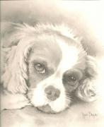 dessin animaux portrait animal chien crayon : Sam