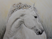 tableau animaux animaux cheval blanc crayons : Cheval blanc