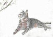 dessin animaux la charielle : Le chat & l'oiseau