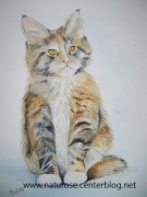 tableau animaux chaton chat debout americain : Chaton Maine Coon
