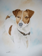 tableau animaux chien jack russel animaux anglais : Jack Russel