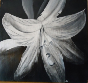 tableau fleurs noir blanc fleur ombre : fleur exotique