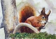 tableau animaux ecureuil animaux : écureuil