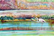tableau marine salins flaments hiver hyeres : le flamants solitaire aux Salins de Hyères