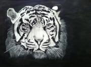 dessin animaux jungle afrique tigre felin : Tigre de l'ombre